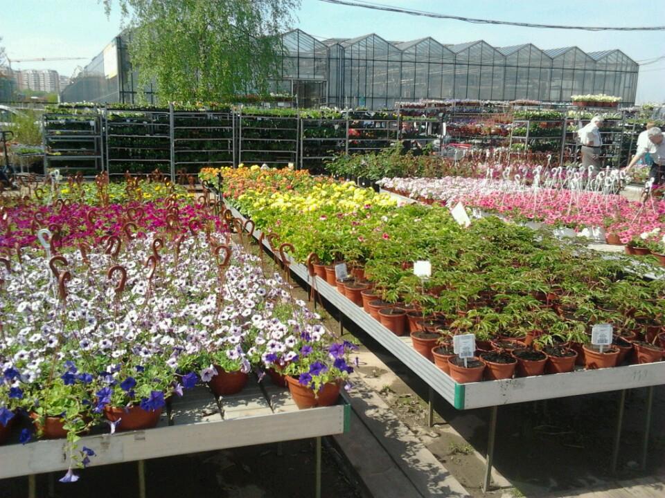 Магазин белая дача растения